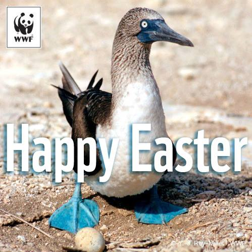 WWF Happy Easter